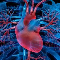 Aorta Blutgefäße Herzmuskelentzündung