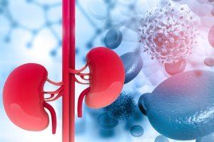 Nierenerkrankungen Cystatin C
