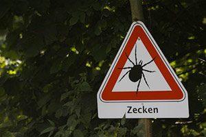 FSME Frühsommer-Meningoenzephalitis Zecken Parasit