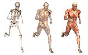 Orthopädische Erkrankungen