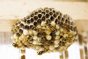 Wespenstiche Wespenstich