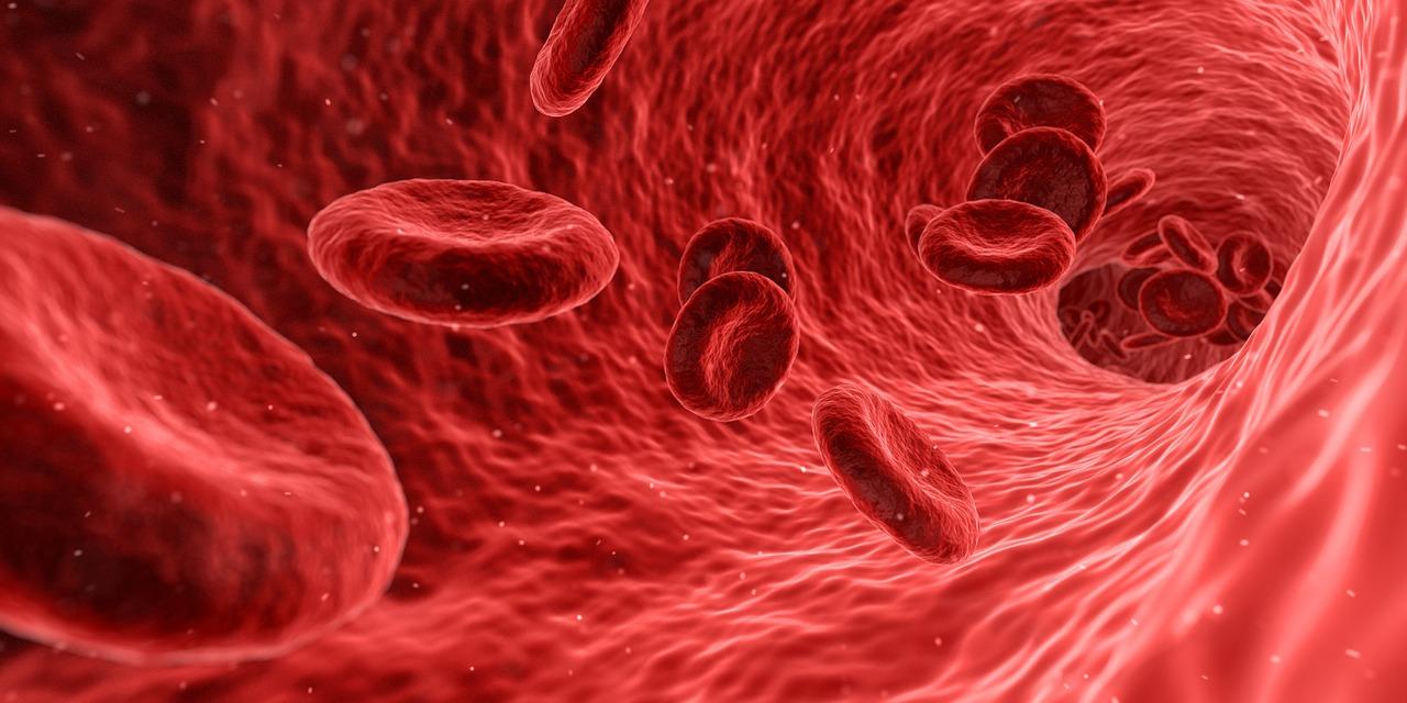 Wie Wird Eine Probe Verarbeitet Labortests Blutwerte