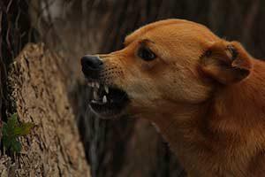 bisswunde bisswunden hund erste hilfe