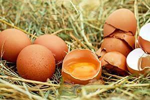 vitamin b12 eier schwefel eiweiß diät