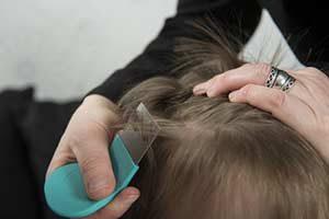 Kopfläuse (Kopflausbefall, lat. Pediculosis)