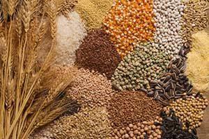 getreide getreideprodukte lebensmittel kalorien kalorientabelle