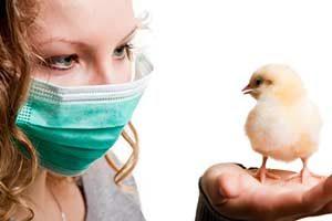 Vogelgrippe (aviäre Influenza)