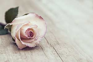 Tod, Sterben, Trauern, Rose, Blume