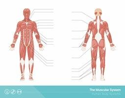 Behandlung Progressive Muskelentspannung Muskelzuckungen Symptome