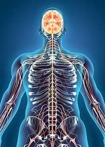 zentralen Nervensystem