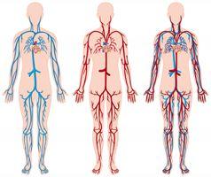 Behandlung Angiologie