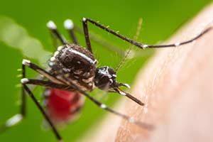 Hausmittel gegen Mückenstiche Insektenschutz Leshmania West-Nil-Virus Wuchereria bancrofti Zika-Virus