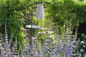 Mönchspfeffer im Garten