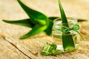 Heilpflanzen Aloe Vera