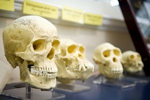 Behandlung Genetik, Schädel, Knochen, Evolution, Neandertaler