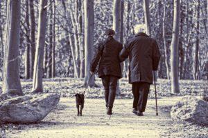 Gehstock alt senioren spazieren hund wald