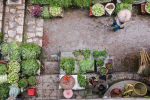 gemüse markt japan diät grün