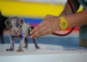 Tierarzt tierärzte veterinät hund