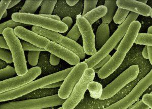 coli bakterien mikroorganismen Clostridien