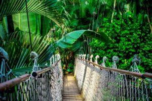 tropen warm länder brücke pflanzen tropisch süden