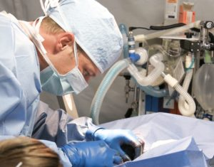 Tierarzt tierärzte veterinät hund katze op chirurgie
