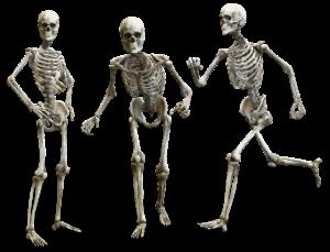 Feldenkrais skelett knochen anatomie bewegung gelenke