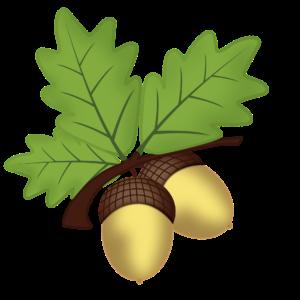 Haselnuss Haselnüsse Nüsse Nuss Baum Pflanze Natur