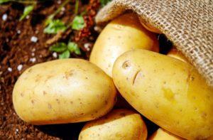 kartoffeln , gemüse , erdfrucht , bio , ernte , kartoffelsack