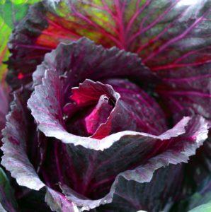 rotkohl , blaukraut , roh , essen , mahlzeit , rotkraut , kohl , rübkohl , zwiebel , apfel , schmoren , gewürze , wintergemüse , lebensmittel , gesund , kochen , küche , beilage , vegetarisch , vegetarier , rohkost , blau , violett