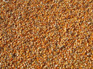 mais , indischer mais , gemüse , samen , lebensmittel , gelb , ernte