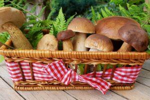 pilze , speisepilze , waldpilze , korb , birkenpilz , steinpilz , maronenpilz , pilzsorten , delikatesse , stilleben , dekorativ , weidenkorb , nahrung , natur , essbar , schwammpilze