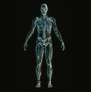 skelett knochen anatomie wirbelsäule mensch lendenwirbel , sakrale , schulterblätter , rippen arme beine