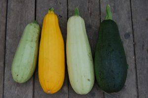 zucchini , gemüse , closeup , vegetarismus , aus dem garten , gelb , grün