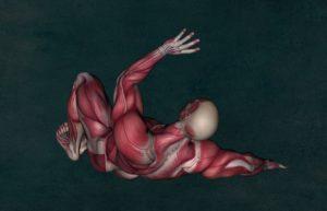 anatomie , muskel , muskulatur , muskelanatomie , bodybuilding , medizinische , anatomische , modell , femoris , physikalische , gesundheit , wissenschaft , medizin , system , sehne , 3d , band , physiologie , gracilis , gastrocnemius, ligamenta, band, bänder