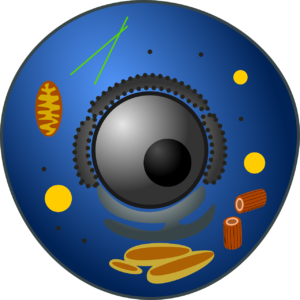 tierzelle , biologie , eukaryoten, Endoplasmatisches Retikulum, eukaryotische Zellen