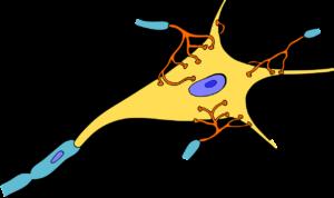 gehirn , zelle , medizin , nerven , neuron , organismus axon dendriten