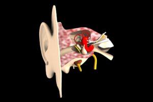 Ohrenschmalz Erklärt Funktion Aufgabe Krankheiten Störung Krank De