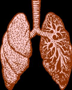 lunge , orgel , menschliche , diagramm , medizin , biologie , anatomie , wissenschaft , system , intern , gesundheitswesen , herz kreislauf , brust , atemwege , infografik , atmung , arzt , lappen , atmen , bronchien