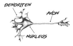 nervenzelle , biologie , dendriten , axon , gehirn