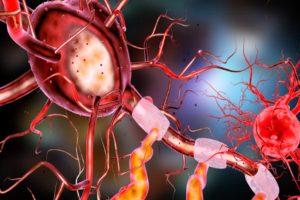 Anastomose neuron , gehirn , menschliche , nerven , wissenschaft , system , medizinische , kopf , medizin , geist , zelle , körper , knochenmark , nervös , synapse , orgel , großhirn , neurologie, nerven, nervenzelle