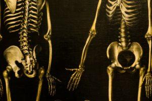 skelett, becken, knochen, anatomie