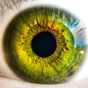 auge , augapfel , grün , vision , blick , netzhaut , sehvermögen , sehen , wimpern