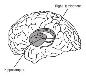 hippocampus , gehirn , anatomie , medizin