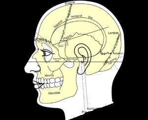 schädel , menschliche , kopf , diagramm , anatomie , skelett , kiefer , bezeichnung , anatomische, Jochbein