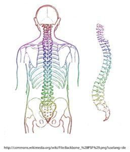 wirbelsäule , skelett , wirbel , wirbelknochen , medizin , mensch , rückgrat , anatomie, lendenwirbel,, knochen, osteo, rückenschmerzen, hws, halswirbelsäule,
