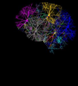 schädel , kopf , verzweigungen , gedanken , geist , psyche , gehirn , denken , psychologie , neuronen , synapsen , axone , nerven , nervensystem , zns