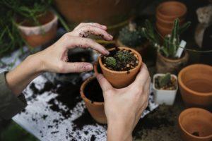 ökologie , umwelt , garten , gartenarbeit , grün , hobby , natur , pflanze , töpfe , arbeiten , frau , menschen , nahaufnahme , hände , topfpflanzen , kakteen , wächst , pflanzen , staalsnijder ,