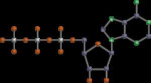 molekül , nukleotid , atp , adenosintriphosphat , nukleinsäure , rna , energie , energielieferant , zelle , adeninrest , ribose , phosphat , biologie , zeichnung