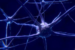 nervenzelle , neuron , gehirn , neuronen , nervensystem , synapse , nervenbahnen , ribosomen , vesikel , nervengeflecht , netzwerk, vegetatives nervensystem,