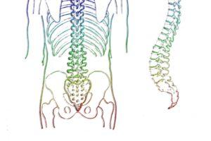Steißbein, Becken, wirbelsäule , skelett , wirbel , wirbelknochen , medizin , mensch , rückgrat , anatomie